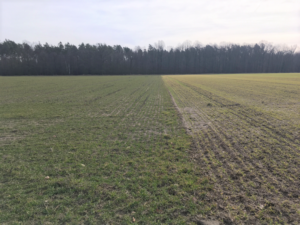 Read more about the article Foliar applications will kick-start crops this spring