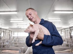 Improve pig housing with high performance insulation