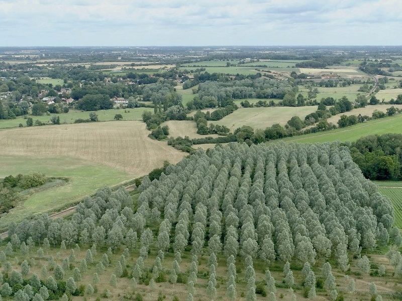 Blenheim boosts timber returns with English Willow