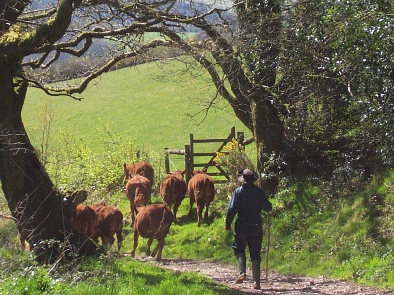 Call to shape West Country's rural future