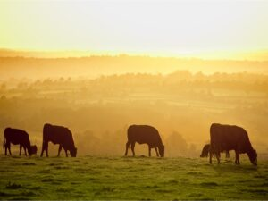 Farming is lynchpin of West Country's future