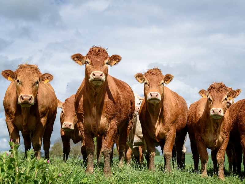 World's first smart beef contract to transform UK farming