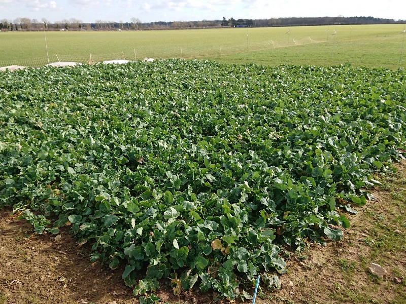 You are currently viewing Cereals 2021 crop plots overwinter well