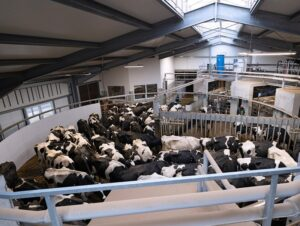 New robotic technology for flexible milking systems