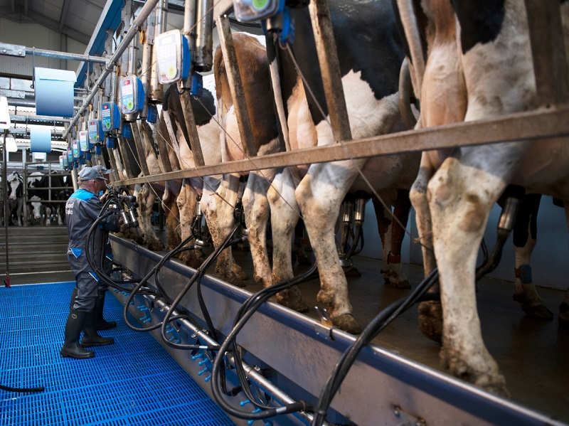 You are currently viewing Switch to conventional parlour boosts herd health