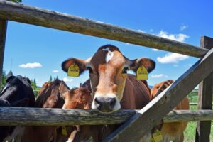 Read more about the article Plan cash flow now to avoid feed cost issues