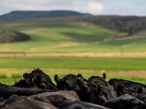 Read more about the article Bold plans to eradicate BVD and sheep scab by 2031
