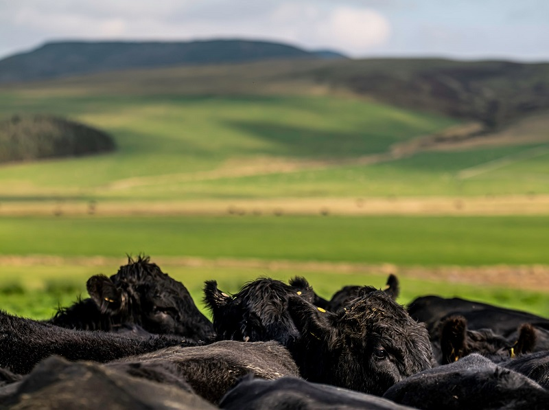 You are currently viewing Bold plans to eradicate BVD and sheep scab by 2031